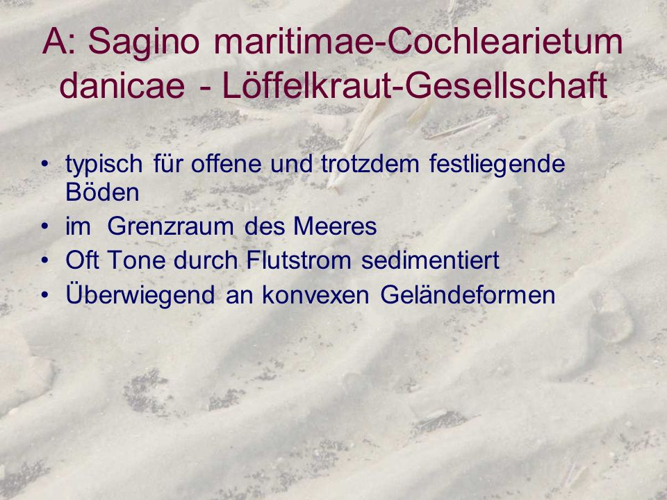 A: Sagino maritimae-Cochlearietum danicae - Löffelkraut-Gesellschaft