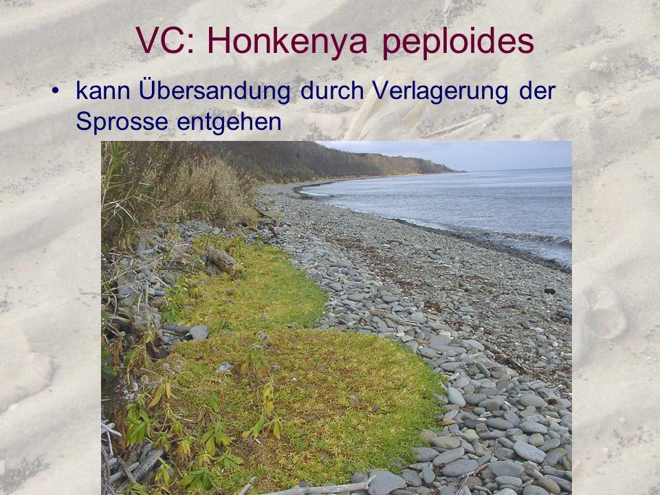 VC: Honkenya peploides
