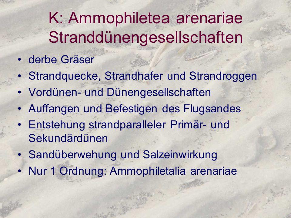 K: Ammophiletea arenariae Stranddünengesellschaften