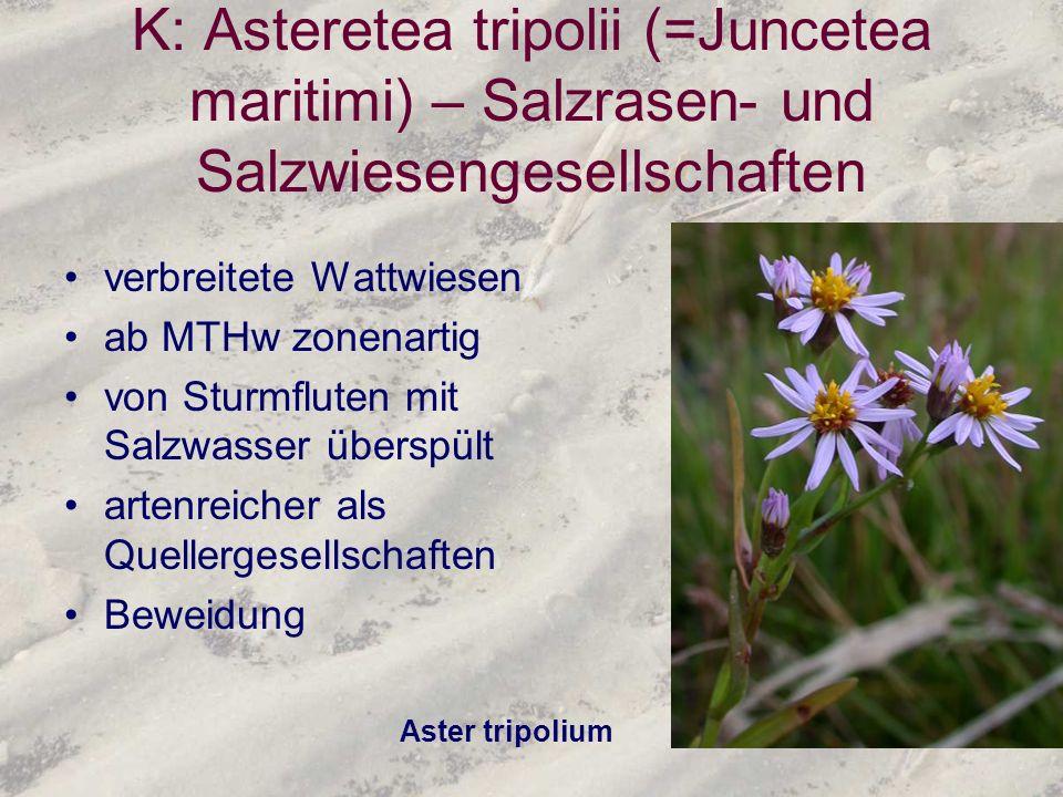 K: Asteretea tripolii (=Juncetea maritimi) – Salzrasen- und Salzwiesengesellschaften
