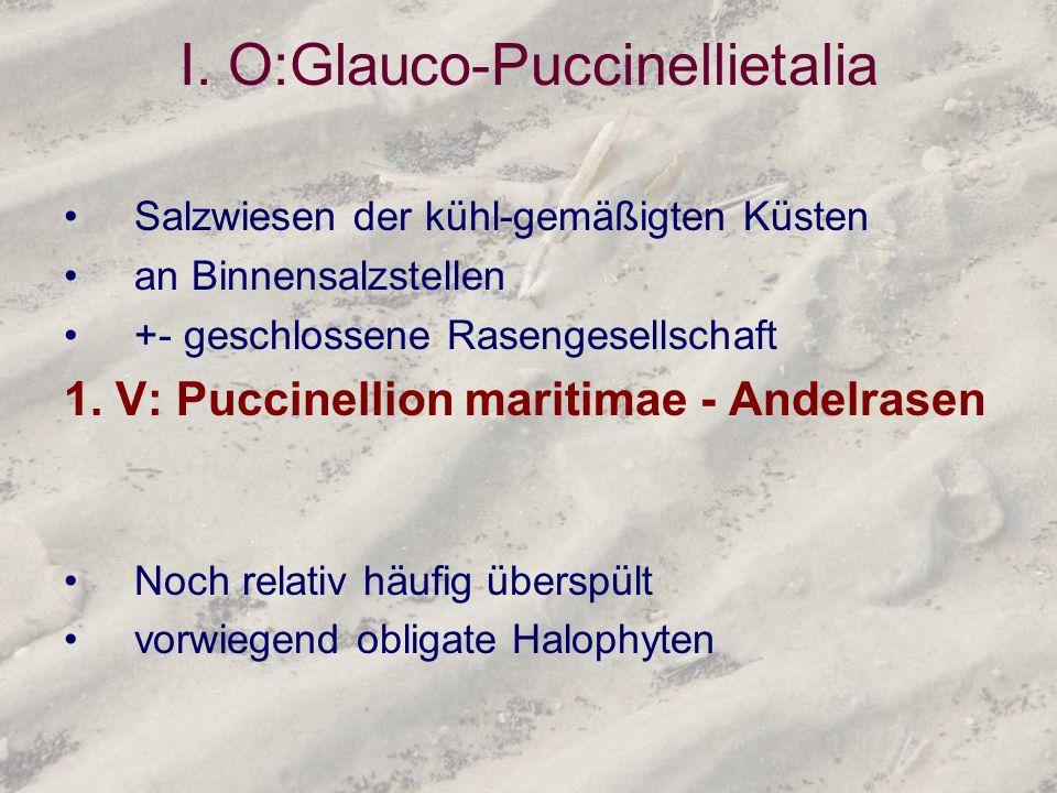 I. O:Glauco-Puccinellietalia