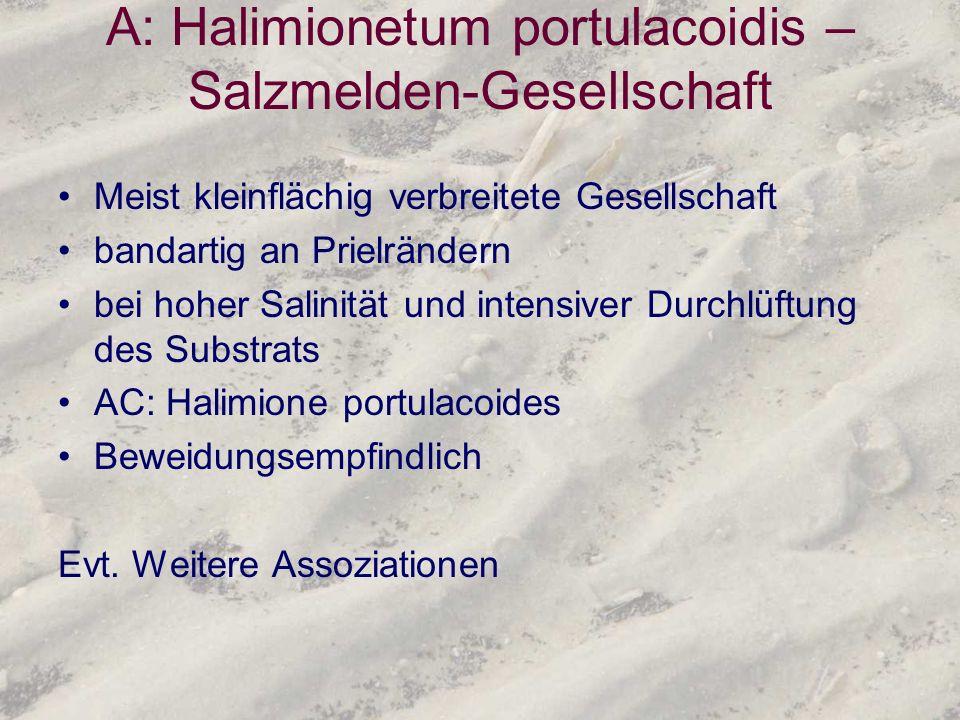 A: Halimionetum portulacoidis – Salzmelden-Gesellschaft
