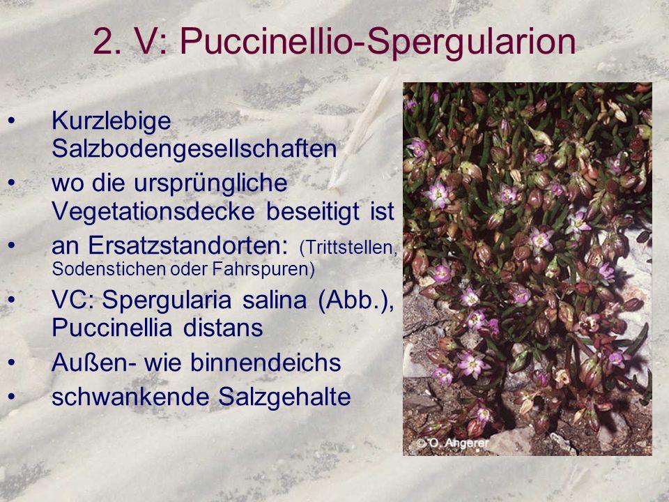 2. V: Puccinellio-Spergularion