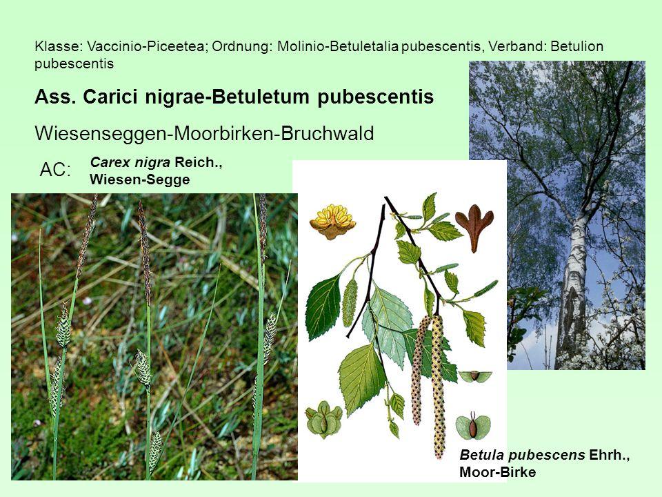 Ass. Carici nigrae-Betuletum pubescentis