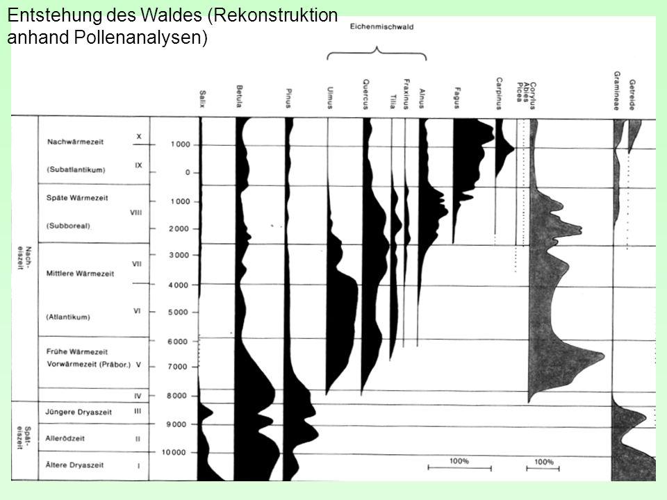 Entstehung des Waldes (Rekonstruktion anhand Pollenanalysen)