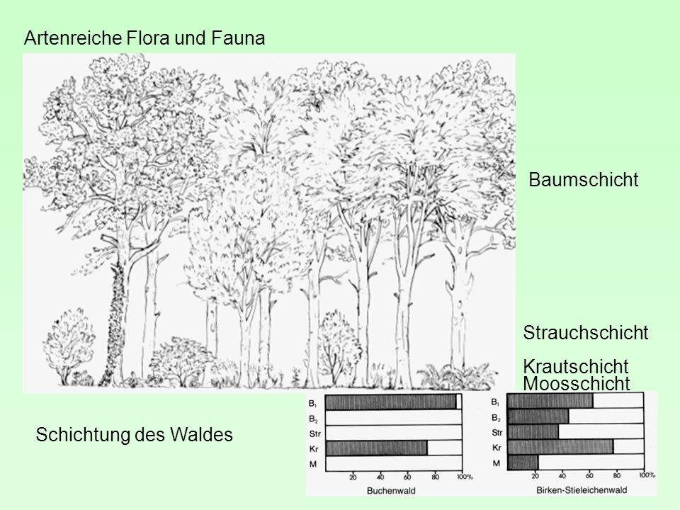 Artenreiche Flora und Fauna