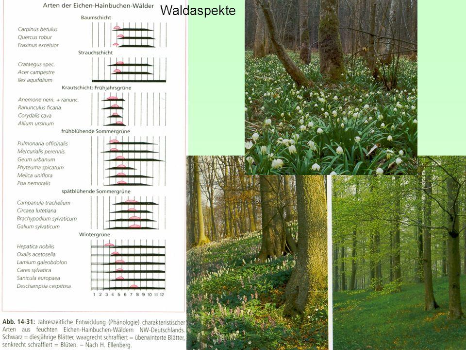 Waldaspekte