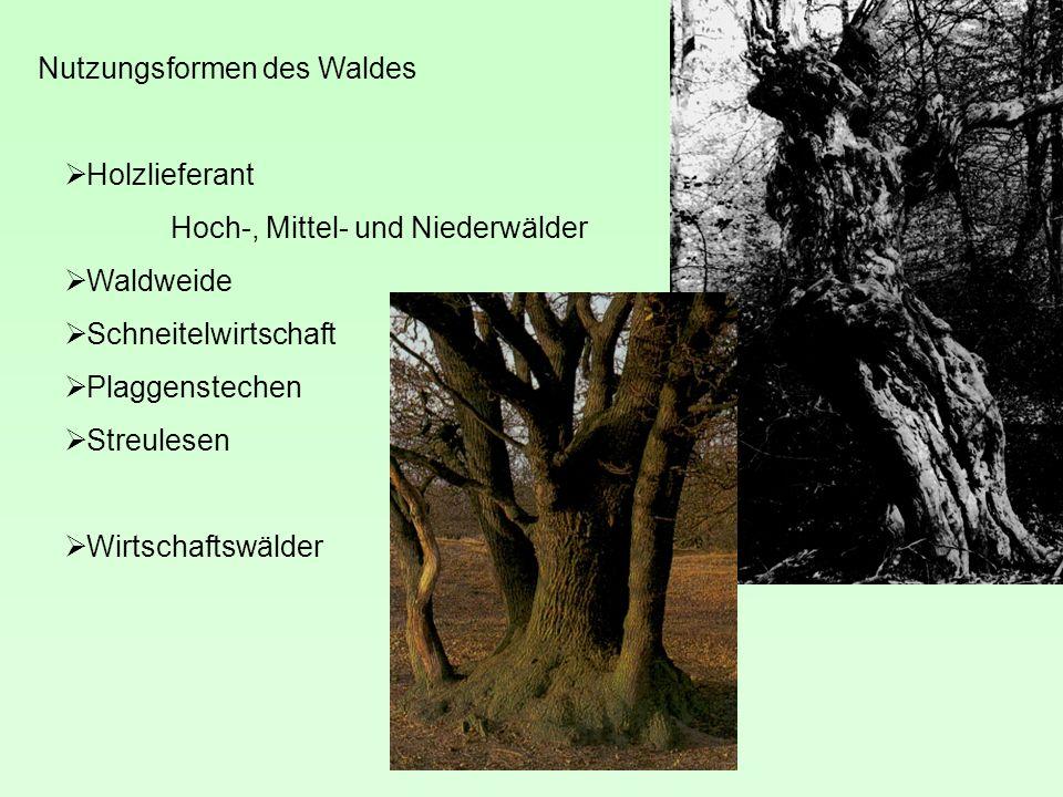 Nutzungsformen des Waldes