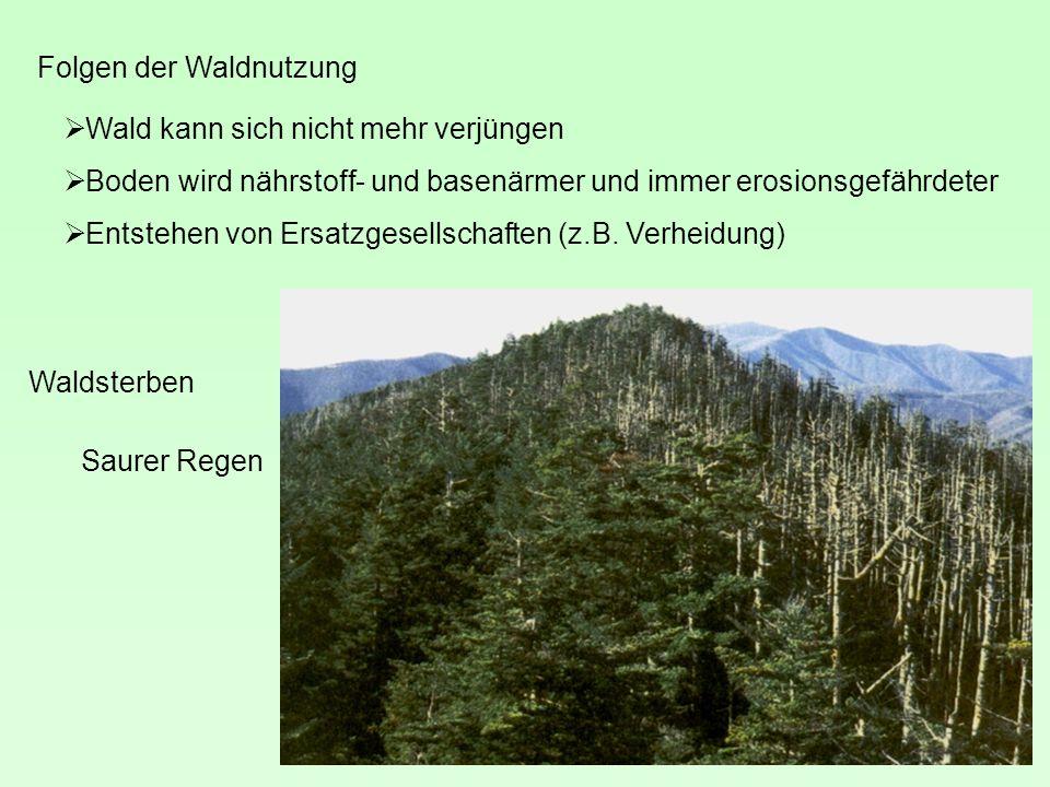 Folgen der Waldnutzung