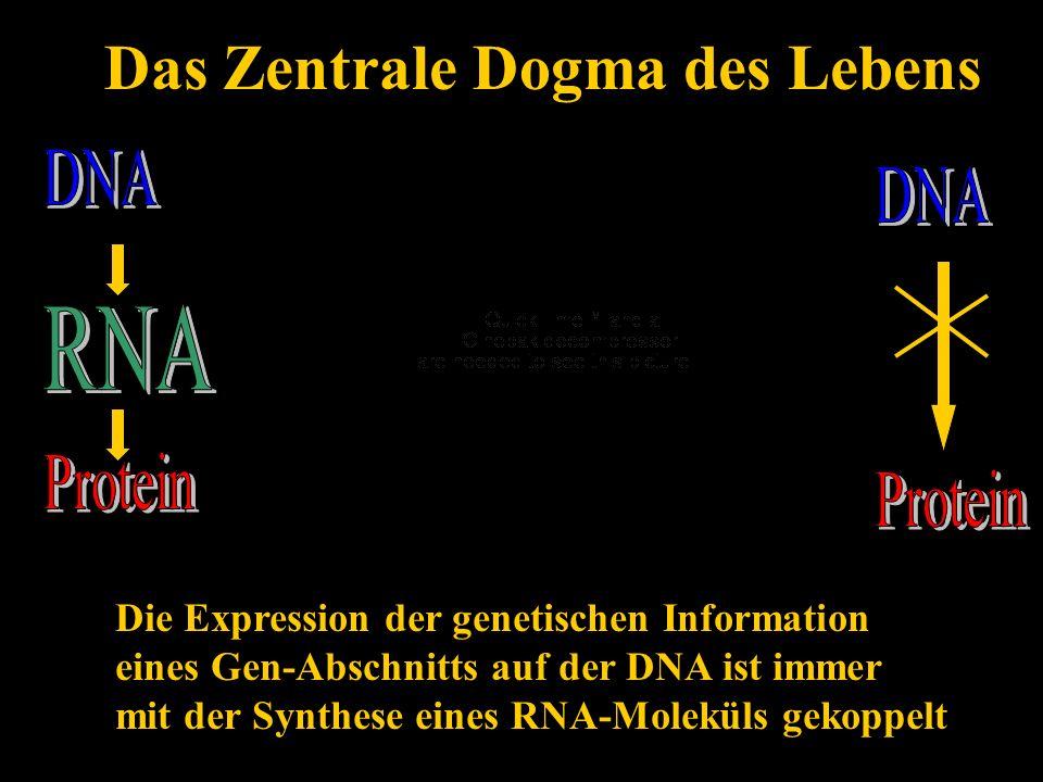 Das Zentrale Dogma des Lebens - ppt video online herunterladen
