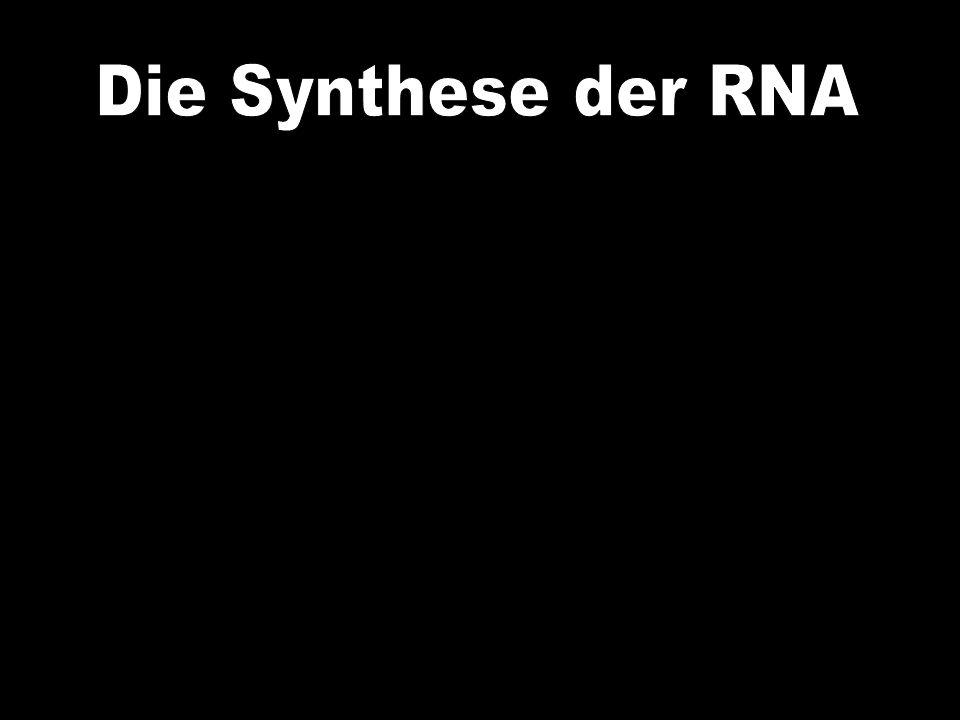 Die Synthese der RNA