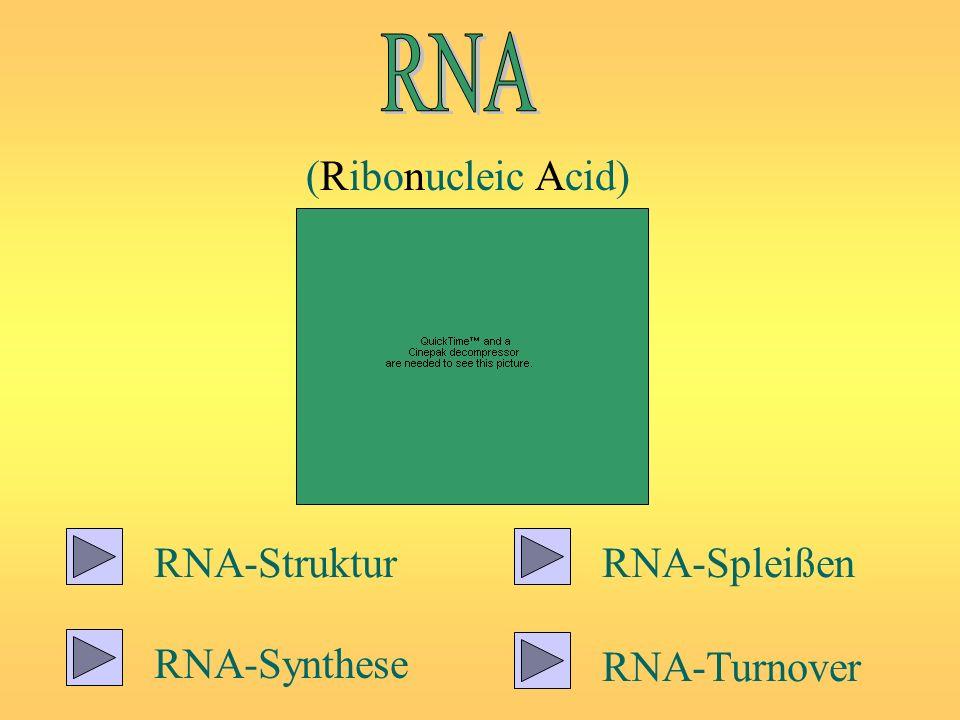 RNA (Ribonucleic Acid) RNA-Struktur RNA-Spleißen RNA-Synthese