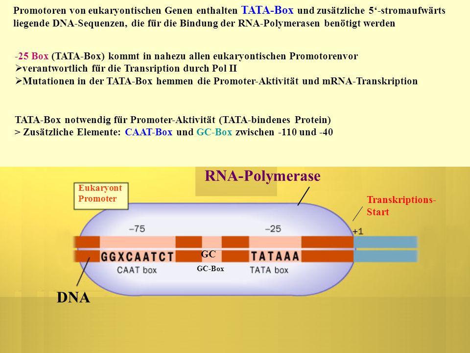 DNA RNA-Polymerase DNA