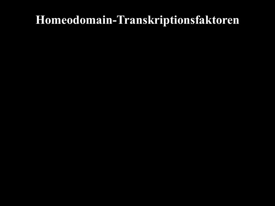 Homeodomain-Transkriptionsfaktoren