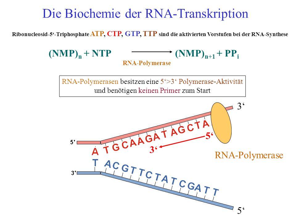 Die Biochemie der RNA-Transkription