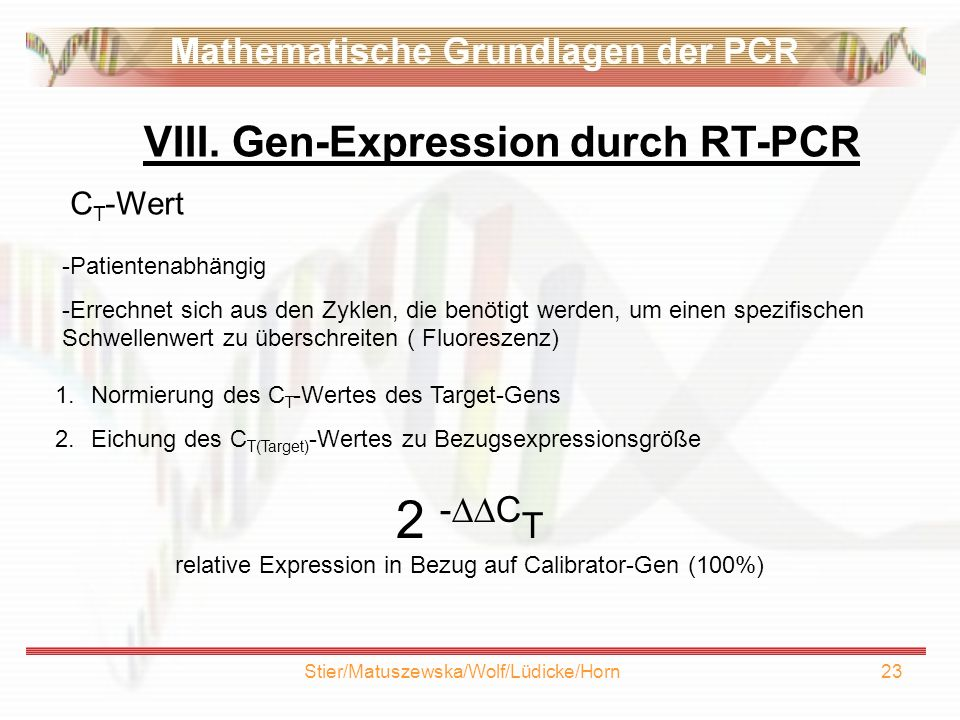 VIII. Gen-Expression durch RT-PCR
