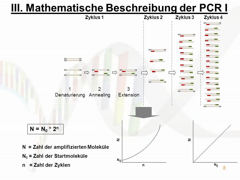 III. Mathematische Beschreibung der PCR I
