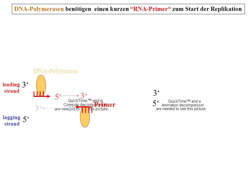 DNA-Polymerasen benötigen einen kurzen RNA-Primer zum Start der Replikation