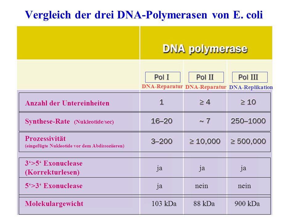 Vergleich der drei DNA-Polymerasen von E. coli