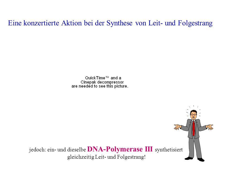 Eine konzertierte Aktion bei der Synthese von Leit- und Folgestrang