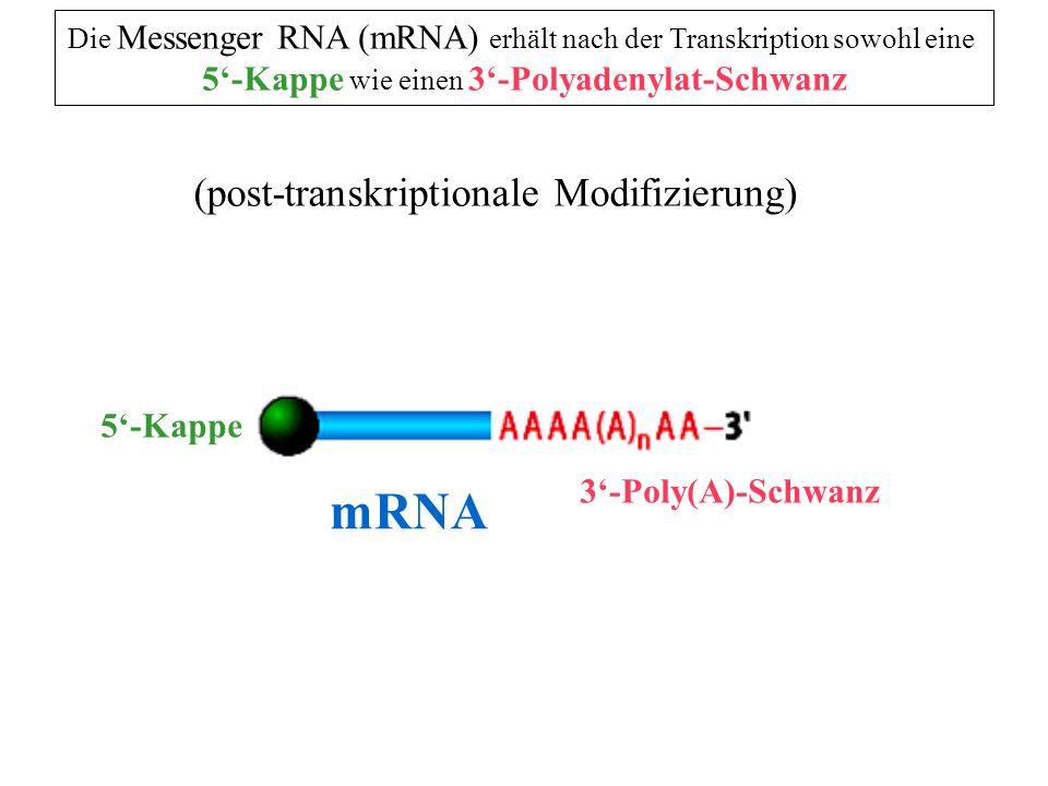 mRNA (post-transkriptionale Modifizierung)
