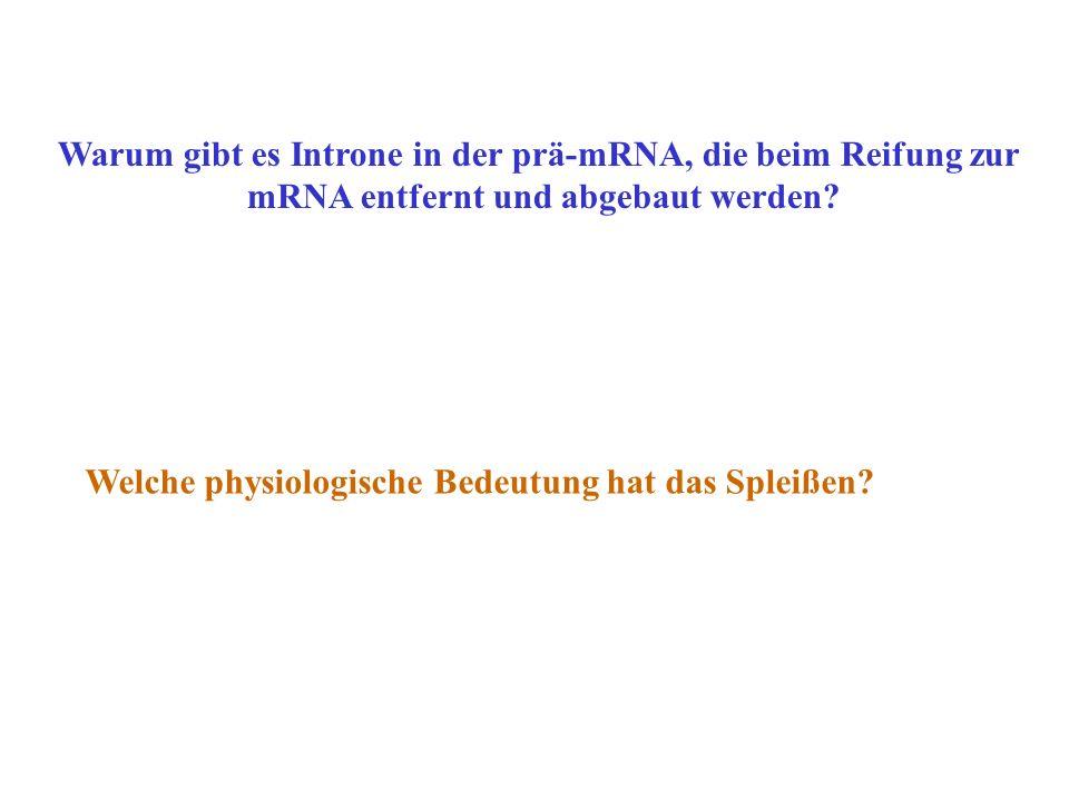Warum gibt es Introne in der prä-mRNA, die beim Reifung zur