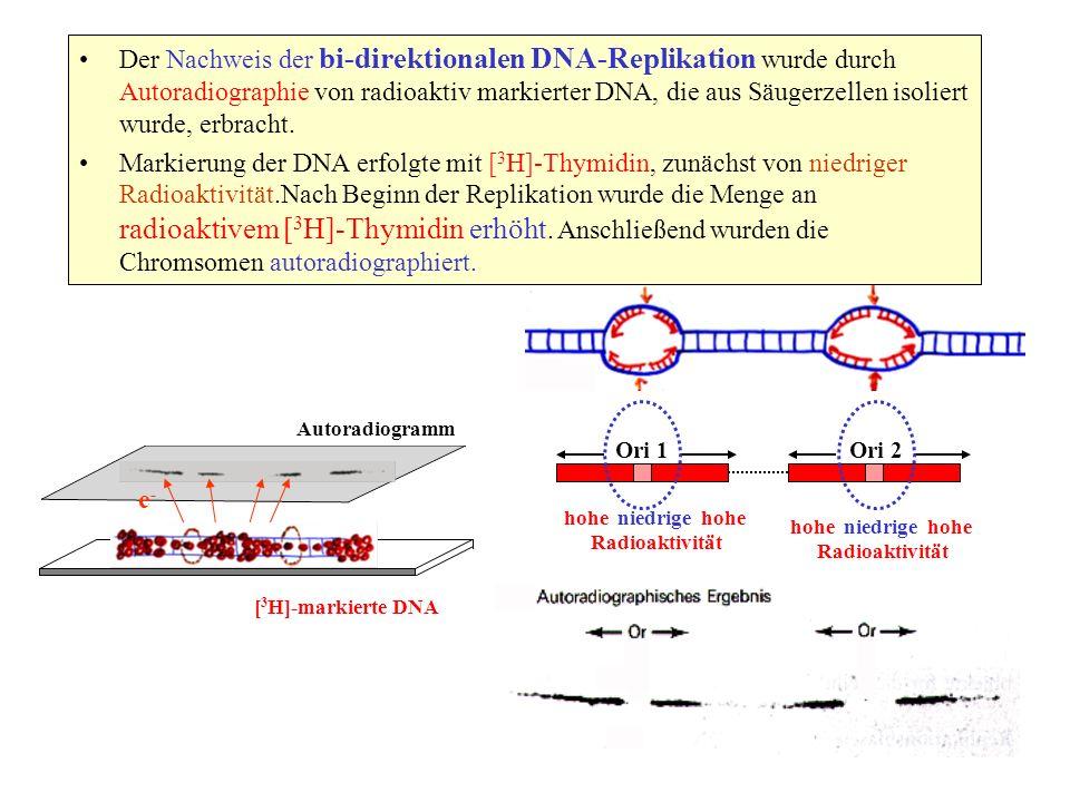 Der Nachweis der bi-direktionalen DNA-Replikation wurde durch Autoradiographie von radioaktiv markierter DNA, die aus Säugerzellen isoliert wurde, erbracht.