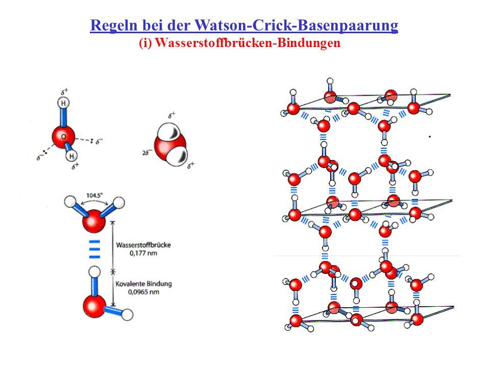 Regeln bei der Watson-Crick-Basenpaarung