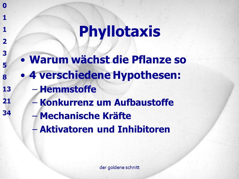 Phyllotaxis Warum wächst die Pflanze so 4 verschiedene Hypothesen: