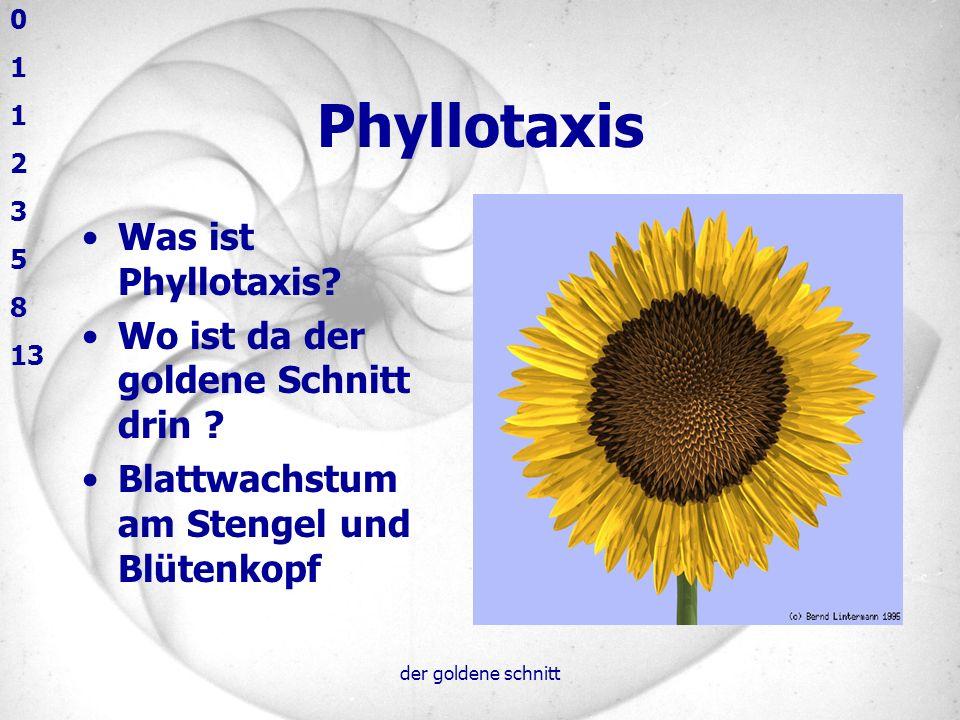 Phyllotaxis Was ist Phyllotaxis Wo ist da der goldene Schnitt drin