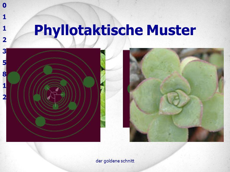 Phyllotaktische Muster