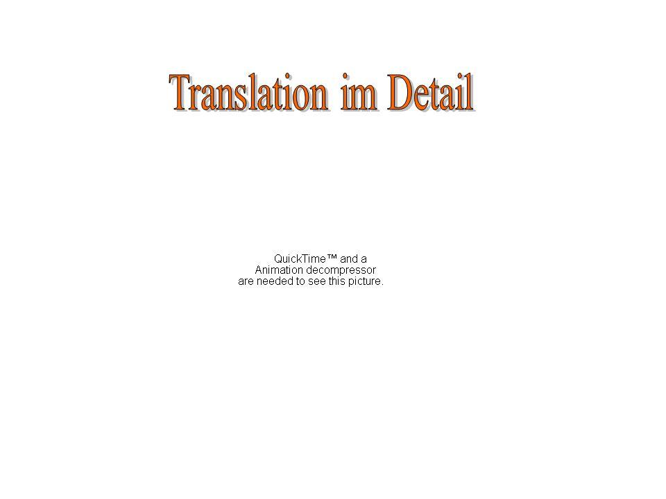 Translation im Detail