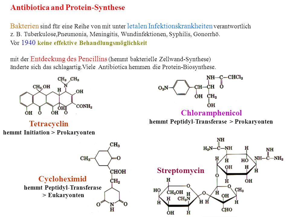 Chloramphenicol Tetracyclin Cycloheximid