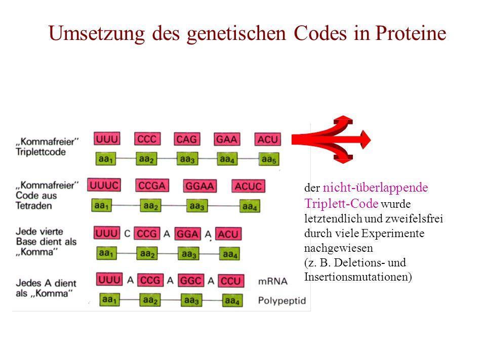 Umsetzung des genetischen Codes in Proteine