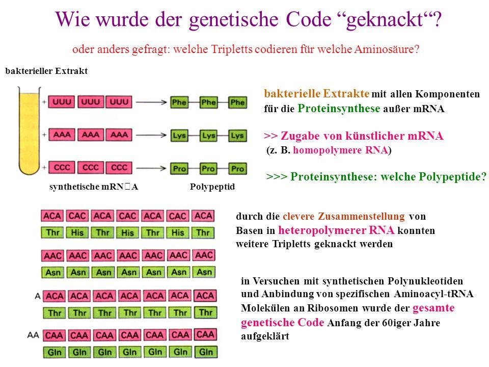 Wie wurde der genetische Code geknackt