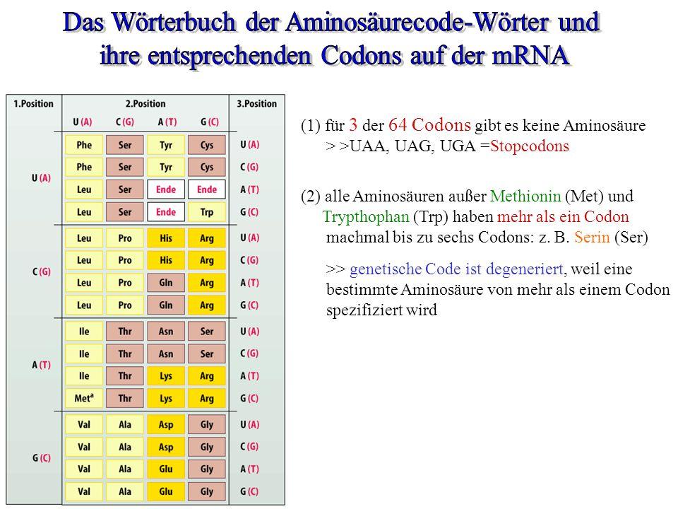 Das Wörterbuch der Aminosäurecode-Wörter und