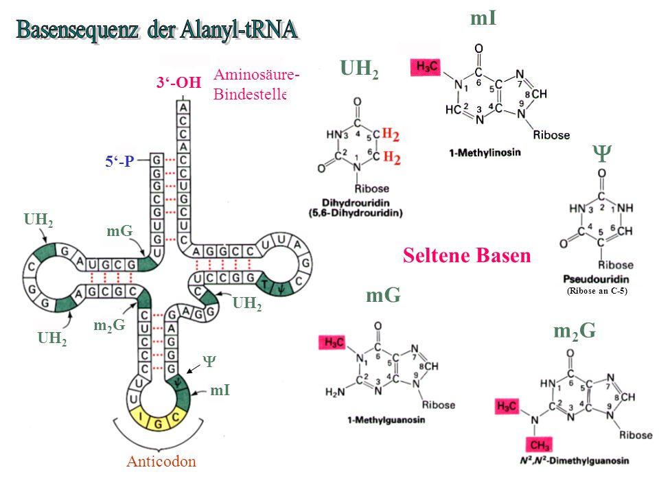 Basensequenz der Alanyl-tRNA