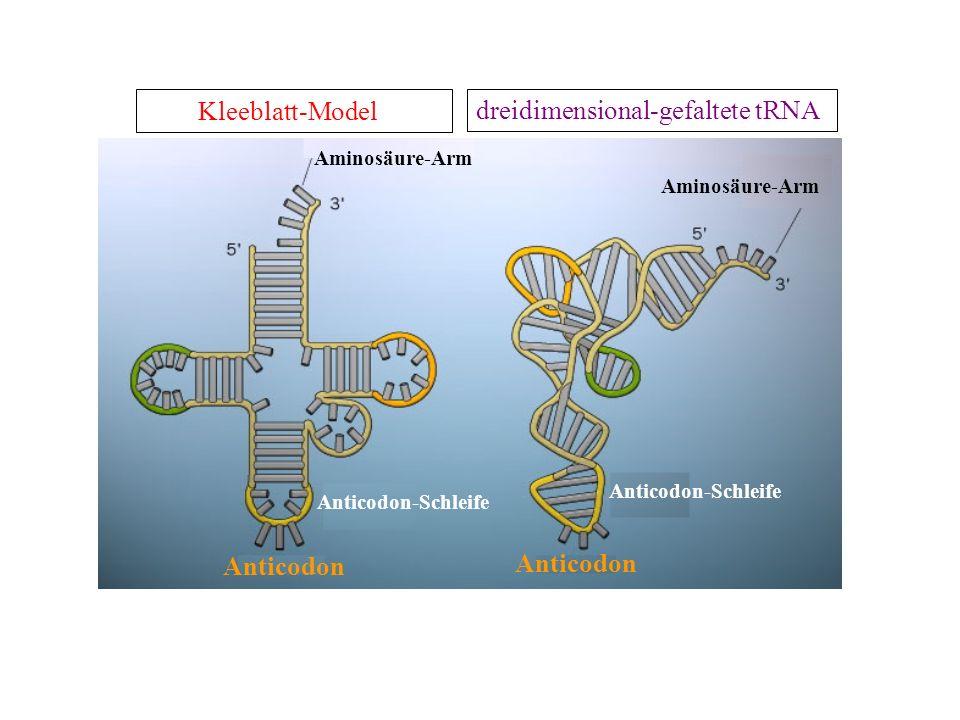 dreidimensional-gefaltete tRNA