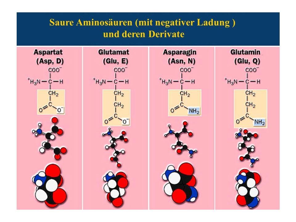 Saure Aminosäuren (mit negativer Ladung )