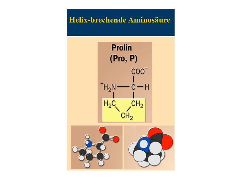 Helix-brechende Aminosäure