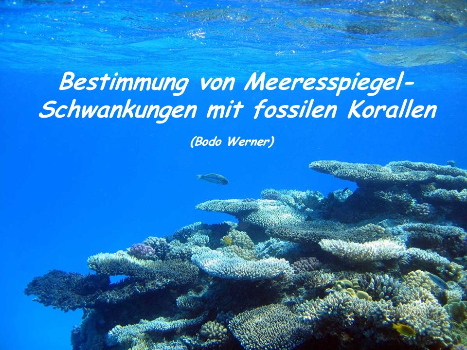 Bestimmung von Meeresspiegel- Schwankungen mit fossilen Korallen