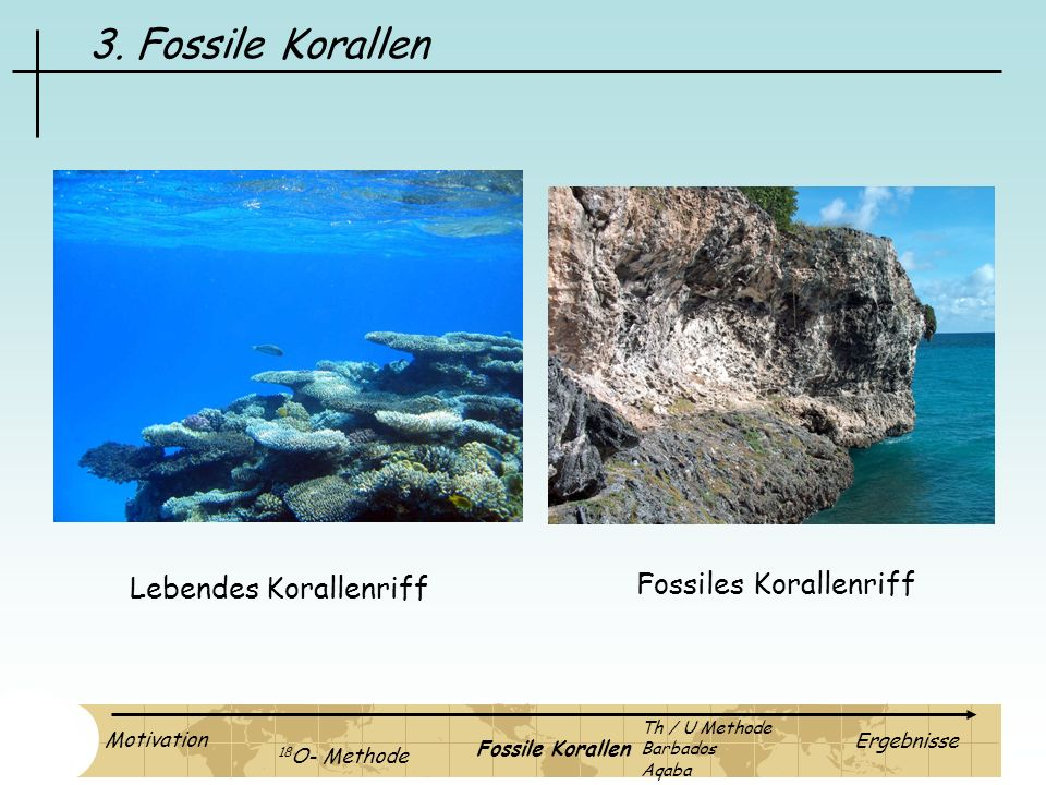 3. Fossile Korallen Fossiles Korallenriff Lebendes Korallenriff