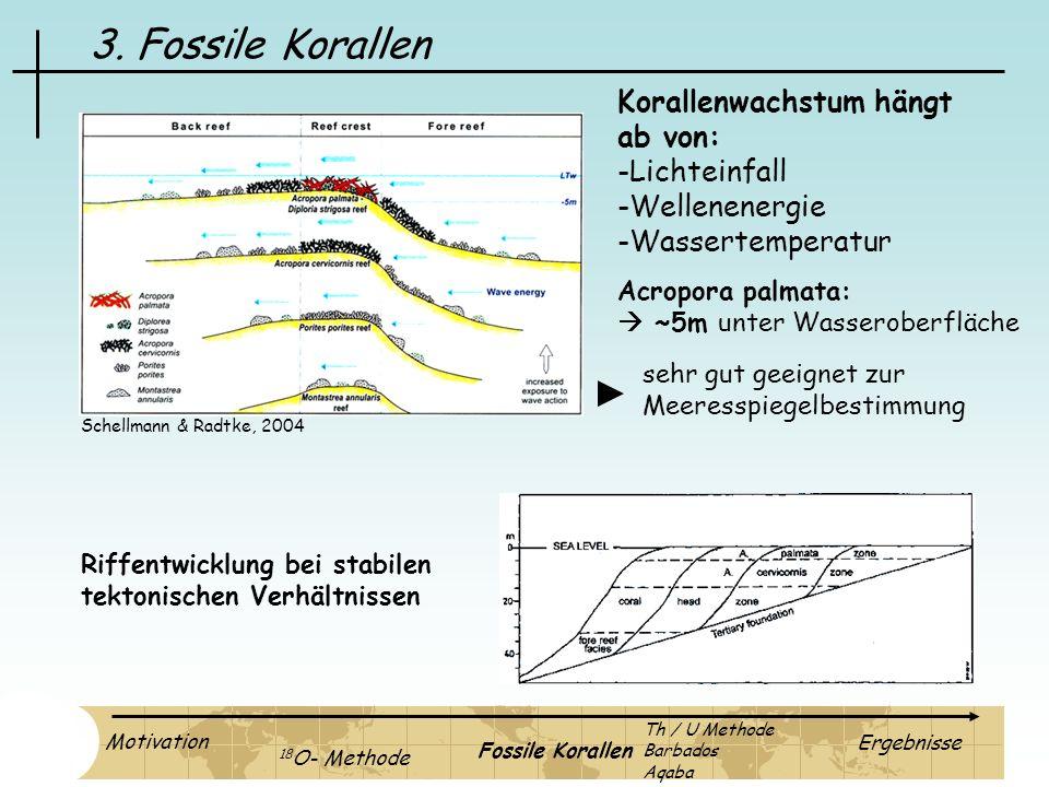 3. Fossile Korallen Korallenwachstum hängt ab von: Lichteinfall