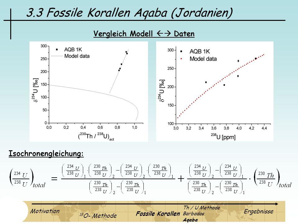 3.3 Fossile Korallen Aqaba (Jordanien)