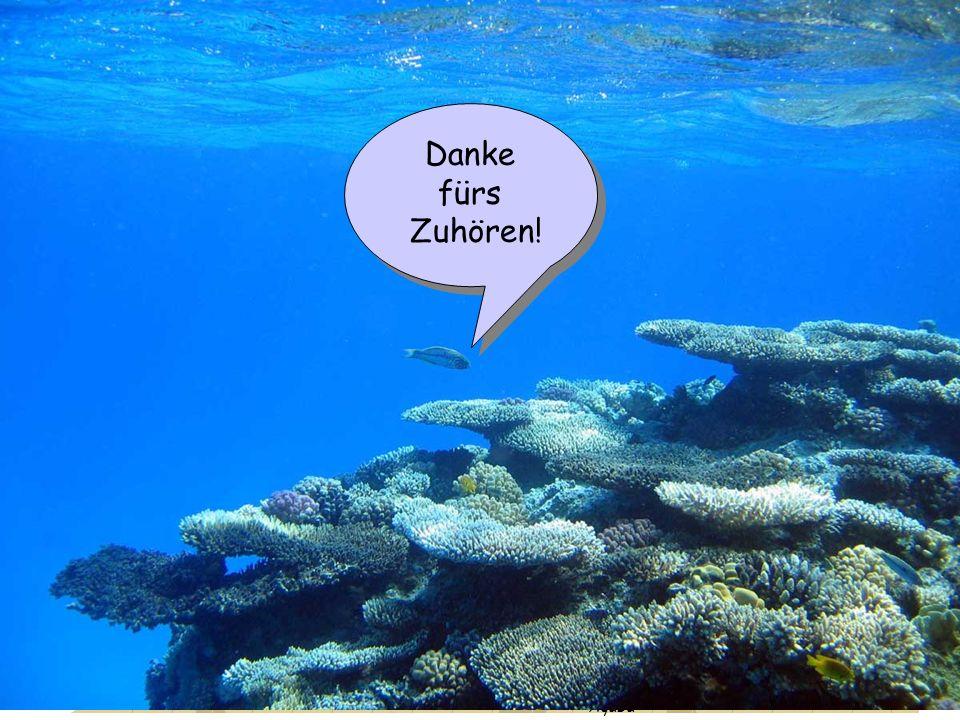 Danke fürs Zuhören! Motivation Ergebnisse Fossile Korallen