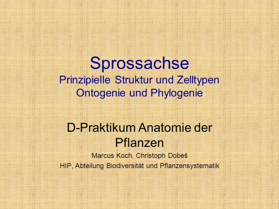 Sprossachse Prinzipielle Struktur und Zelltypen Ontogenie und Phylogenie