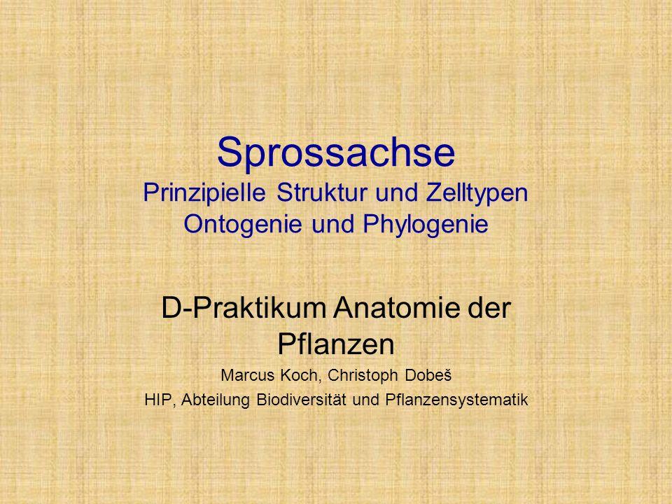 D-Praktikum Anatomie der Pflanzen Marcus Koch, Christoph Dobeš - ppt ...