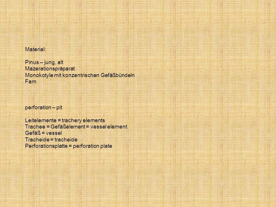 Material:Pinus – jung, alt. Mazerationspräparat. Monokotyle mit konzentrischen Gefäßbündeln. Farn. perforation – pit.