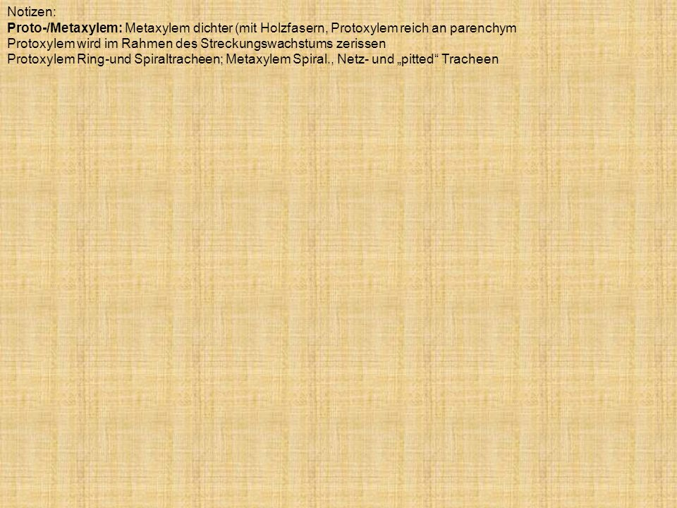 Notizen:Proto-/Metaxylem: Metaxylem dichter (mit Holzfasern, Protoxylem reich an parenchym.