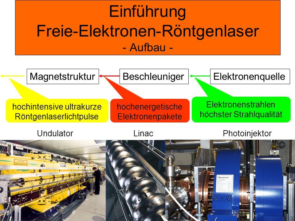 Einführung Freie-Elektronen-Röntgenlaser - Aufbau -